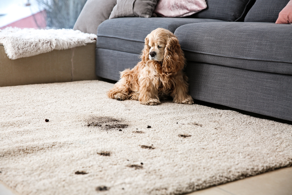 Bacteria on carpets - Wise carpet cleaning
