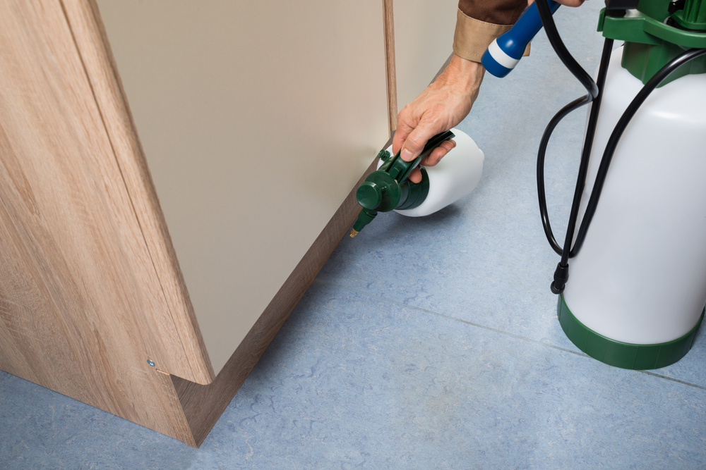 Carpet Repair Services by Wise Cleaners